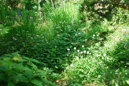 野放図に咲く花36