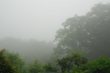 霧にむせぶ5