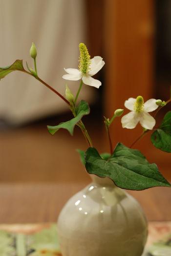 どくだみの花と花瓶16