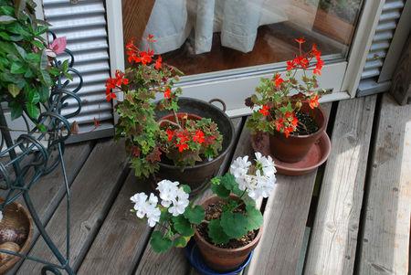 鉢植えの花5