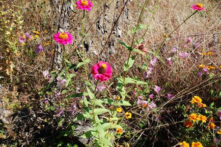 夏の花4・散歩道で4