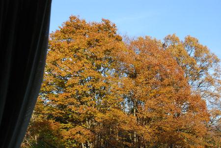 窓から・欅大木