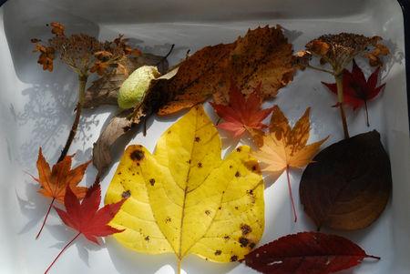 落ち葉色々