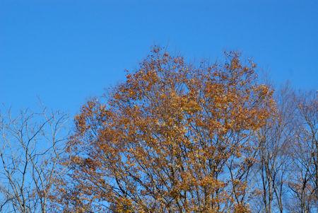 キラキラ金色の大木2