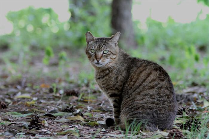 猫IMG_0631