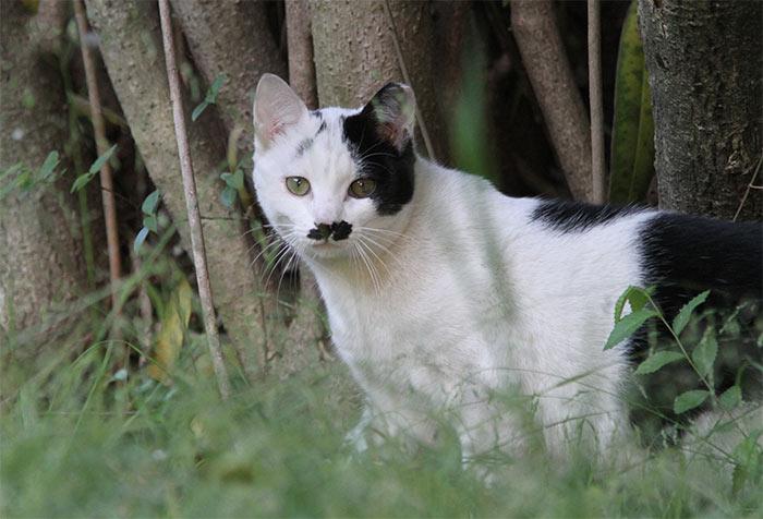 猫IMG_0699