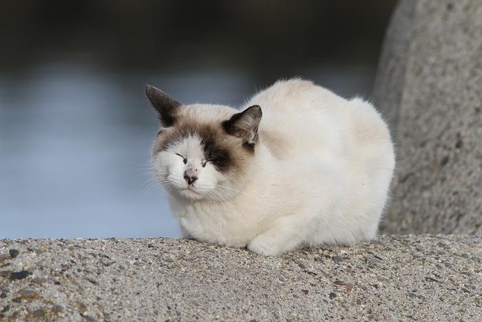 猫resize0884