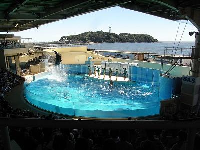 20120823新江の島水族館 (10)