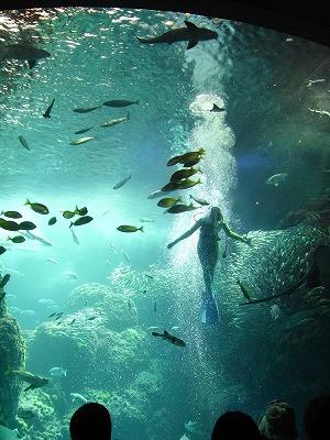 20120823新江の島水族館 (4)