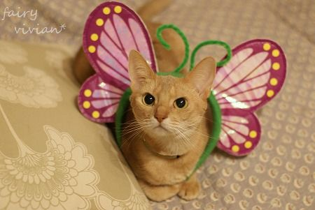 fairy131031 1