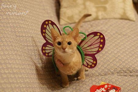 fairy131031 2