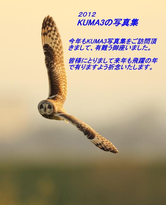 20001_20121231184906.jpg