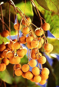 250px-Dimocarpus_longan_fruits.jpg