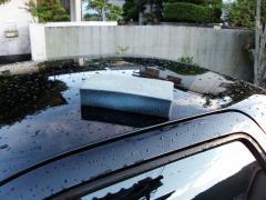 スポンジ洗車