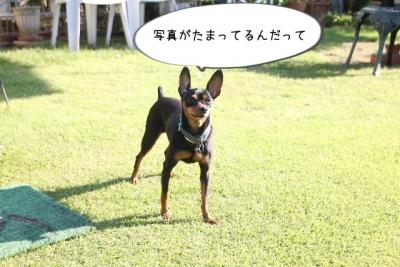2014_09_14_9999_43.jpg