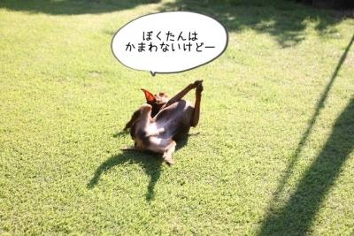 2014_09_14_9999_51.jpg