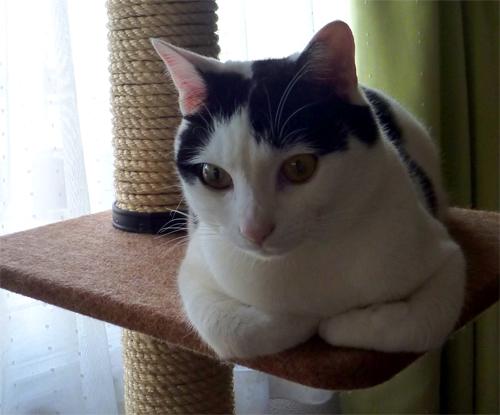 棚の上の猫2