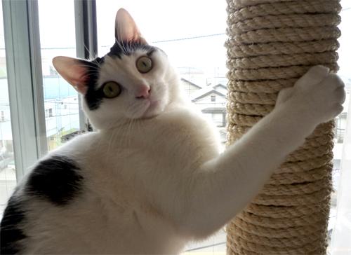 柱に捕まってる猫