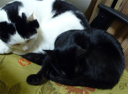 寝る猫2ショット