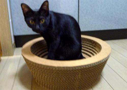 ダンボールベッドの猫