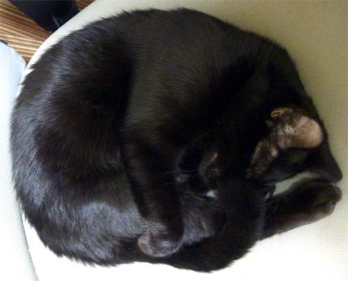 まるまる黒猫