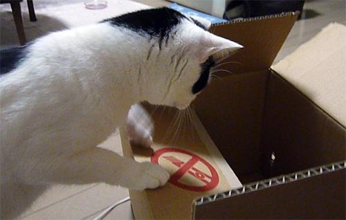 段ボール箱を覗く猫