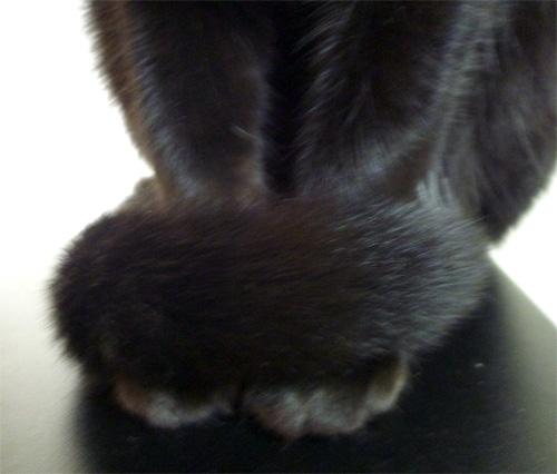 尻尾を足に巻く猫