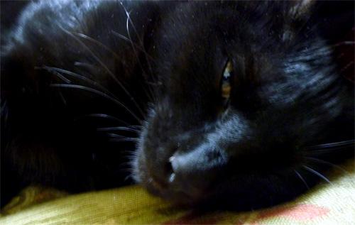 半分目を閉じた黒猫