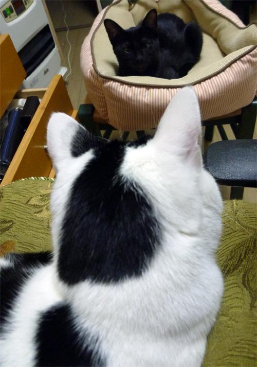 またベッドを取られた猫