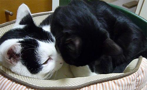 仲良し猫達
