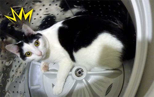 洗濯層の中のネコ
