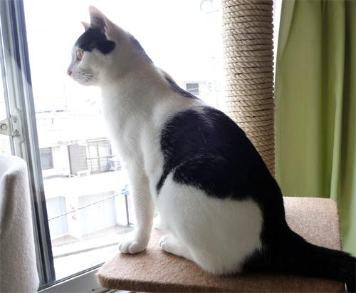 外を見るネコ
