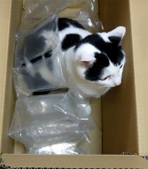パッキン居る猫