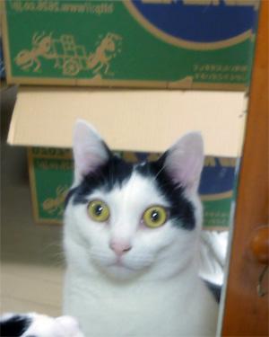 鏡越しに段ボールを見る猫