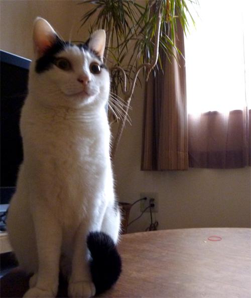 くつろぎ猫