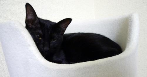 丸くなる黒猫