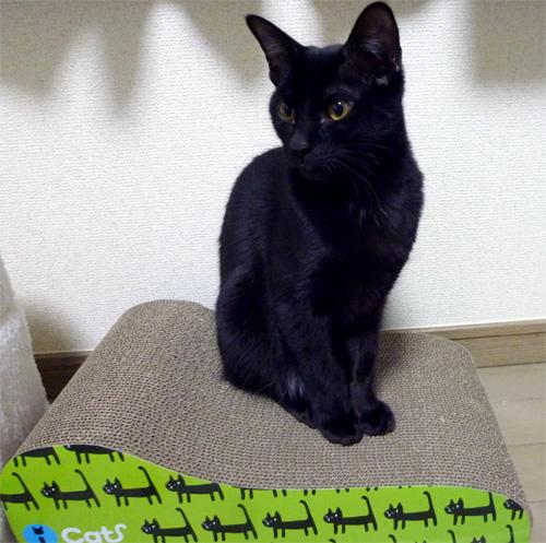 爪とぎダンボールの上の黒猫