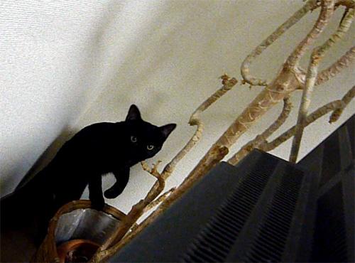 下から行く黒猫