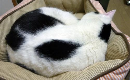 寝てる猫の後姿
