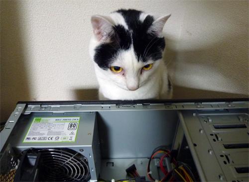 ネコがPC修理見てる