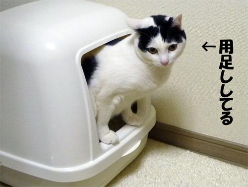 用を足している猫