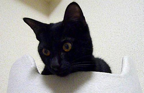 顔を出す黒猫