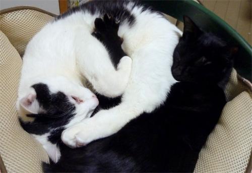 二匹で寝てる猫