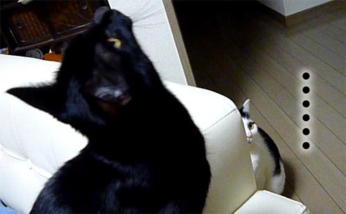 黒猫に出番を取られる
