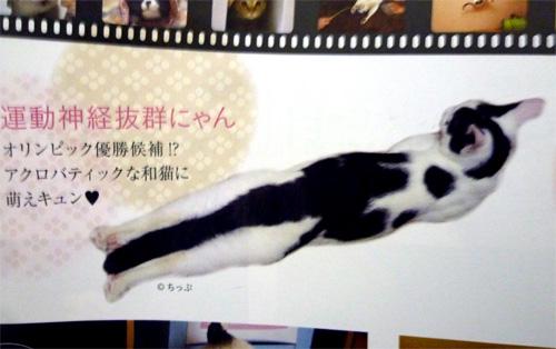 雑誌に載った猫