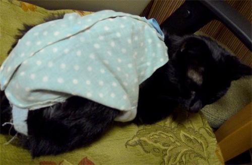 術後服の黒猫