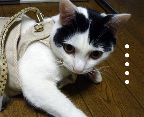 目がうつろな猫
