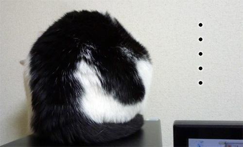 香箱座りの後姿猫