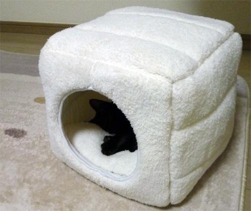 猫のキューブベッド