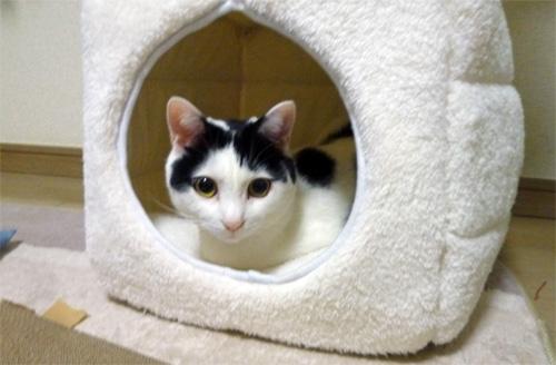 キューブベッドに入る猫